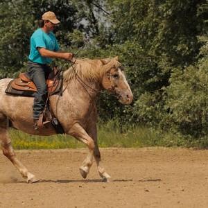 Cheval et cavalier dans la nature
