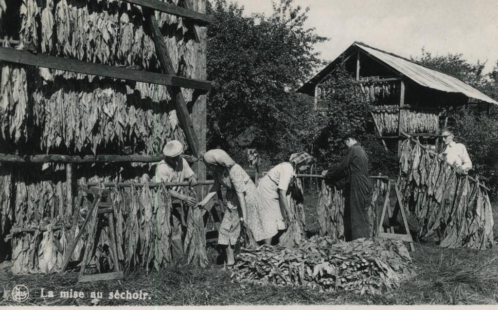 Planteurs de tabac - séchage