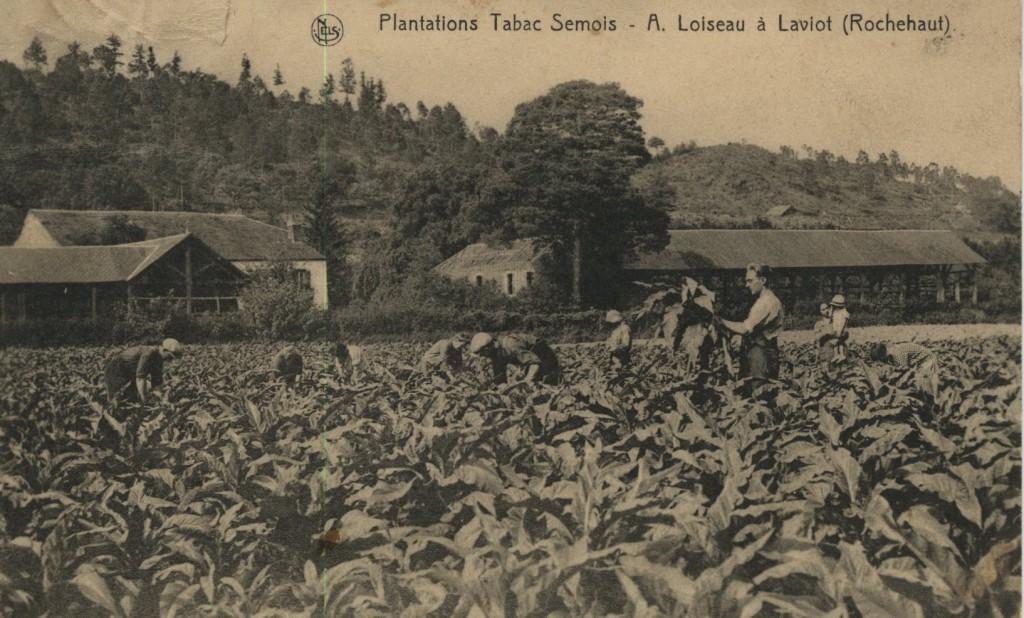 Planteurs de tabac dans champ à tabac